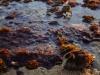 duck-herring-cove-s0141170