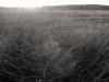 marsh-grass-wellfleet-dscf1266