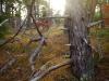 wellfleet-audubon-tree-dscf1226