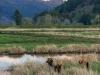 Dean Creek Elk Viewing Area, Oregon
