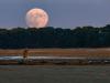 Moonrise over oyster flats at Blackfish Creek, Wellfleet, Massachusetts